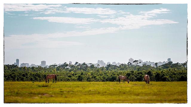 caballos ciudad selva brasil