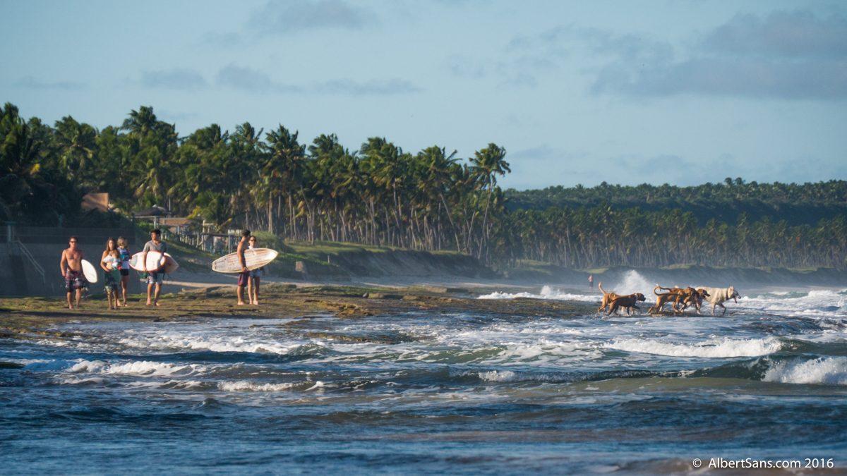 playa perros surf
